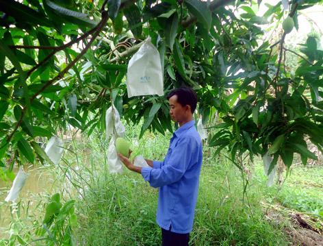 tái chế túi nilon - bọc hoa quả