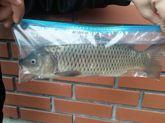 túi zipper đựng cá
